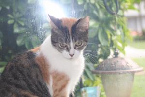 cat-callie05