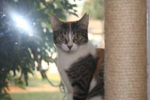 cat-callie04b