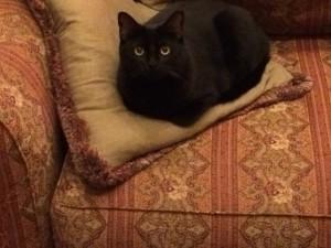 cat-molly2-1