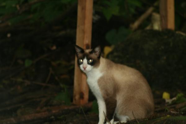 cat-pines-5