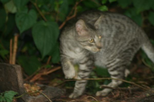 cat-pines-6