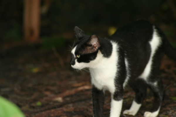 cat-pines4